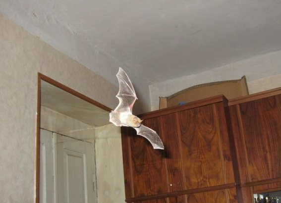 Bat in house